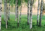 Nordic Forest