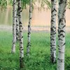 Nordic Forest № 00381